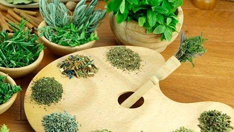 6 plantas saludables para tener en el hogar